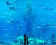 milan aquarium milan aquarium is one of most liked attractions among ...